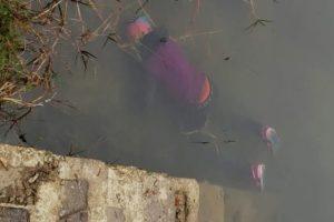 पोखरीमा डुबेर किशोरको मृत्यु